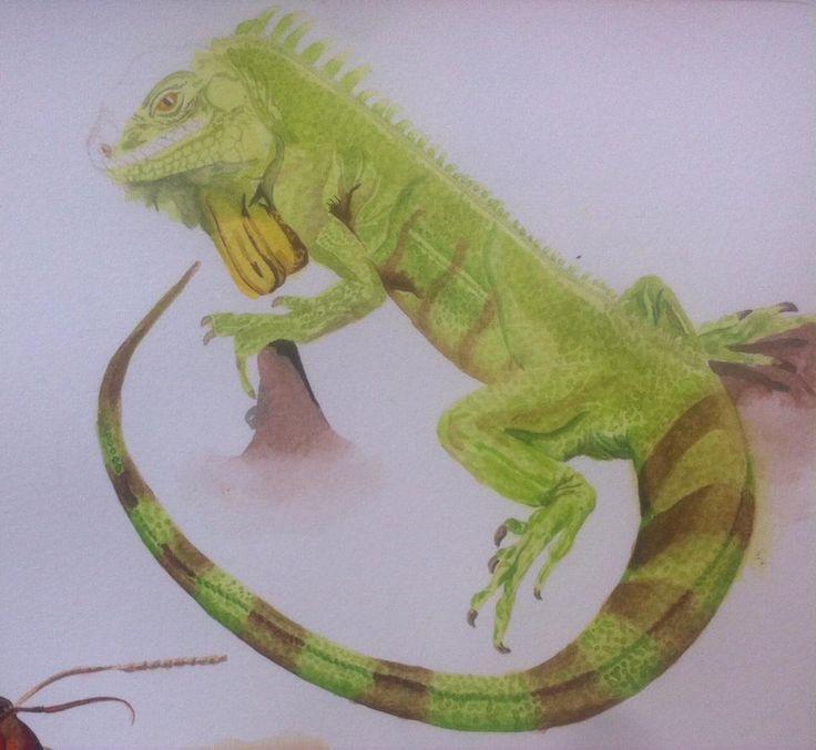 Día 9: Iguana Boceto en acuarela