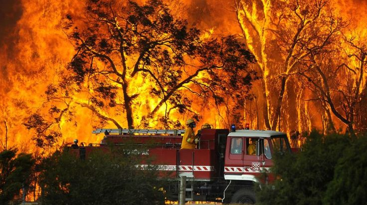 Firefighters rush into the bushfires in an effort to stop it and rescue not only people, but also the animals and nature.
