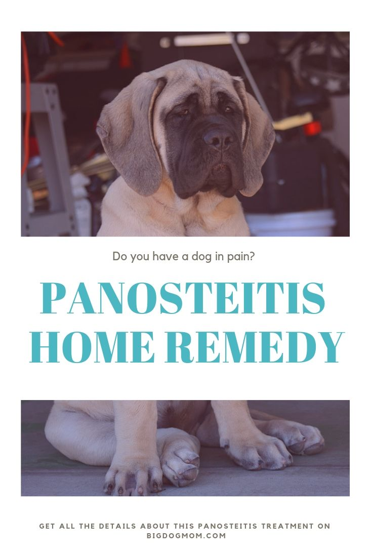 A Proven Panosteitis Home Remedy For All Big Dogs Big Dogs