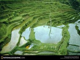 """These terraced rice fields helps to decrease erosion and work well for rice crops which needs to be grown in a flooded area. Built into steep hillsides by intense physical labor and sometimes by using a water buffalo to help in the wetlands."""""""