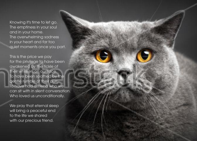 British Shorthair Cat Pet Sympathy Euthanasia Card Pet Sympathy British Shorthair Cats Pets Cats