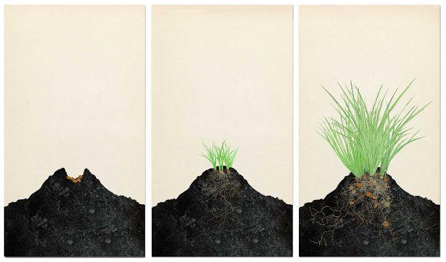 Cyperus esculentus, junciana avellanada, Chufa, fases de crecimiento, Valencia, parte uno, dibujo