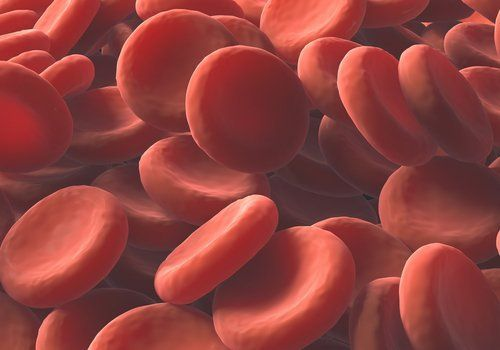 Se sentir fragile, très fatigué-e ou apathique peut être synonyme d'anémie. La cause la plus commune de ce problème est la carence en fer ainsi que certaines déficiences nutritionnelles. Si vous souhaitez augmenter le nombre de globules rouges naturellement dans votre corps, n'hésitez pas à lire cet article. Pourquoi les globules rouges sont-ils importants …