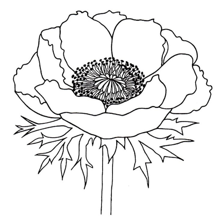 Pattern: Another poppy | Line drawings for patterns ...