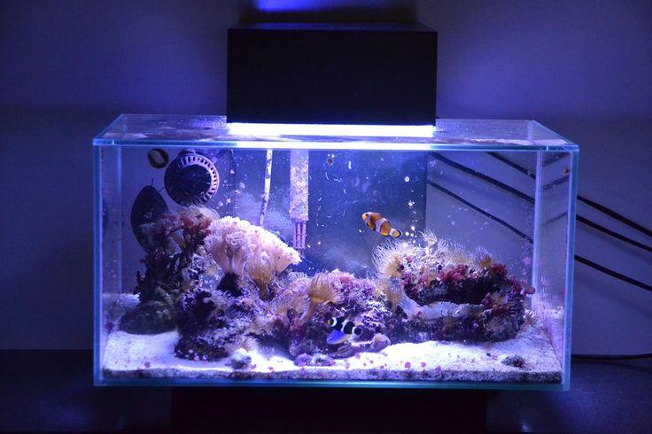 Fluval edge nano reef nano reef aquariums pinterest for Aquarium recifal nano