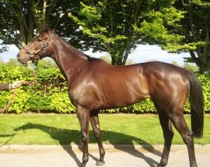 Check out our other winner who won a few days after being put on ParadeRing.ie & she is a high class filly -www.paradering.ie/content/horses/high-class-flat-winning-3yo-shamardal-filly-sale