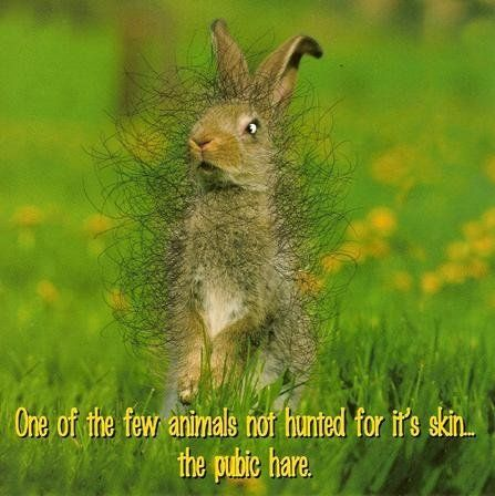 Pubic Hare - Bwahahaha