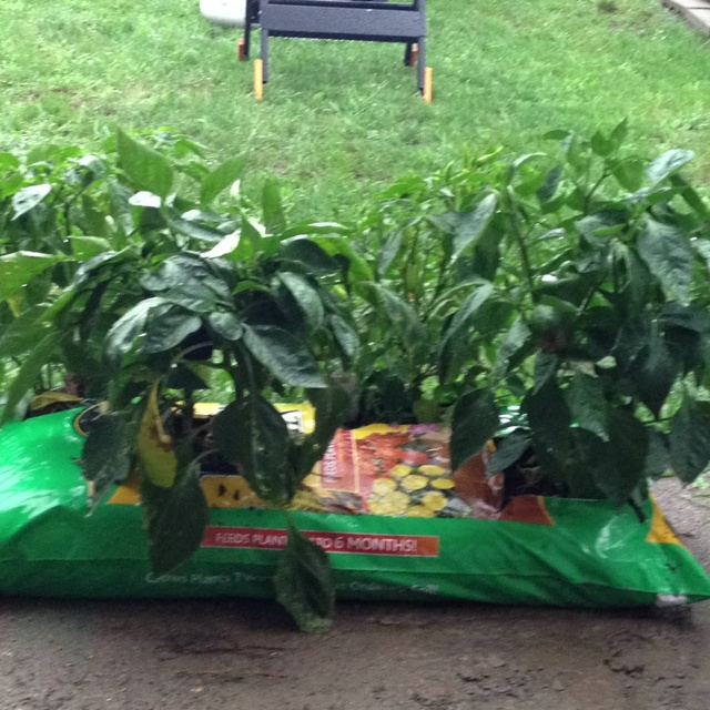 37 best images about fertilizer for veggie garden on - Best potting mix for container gardening ...
