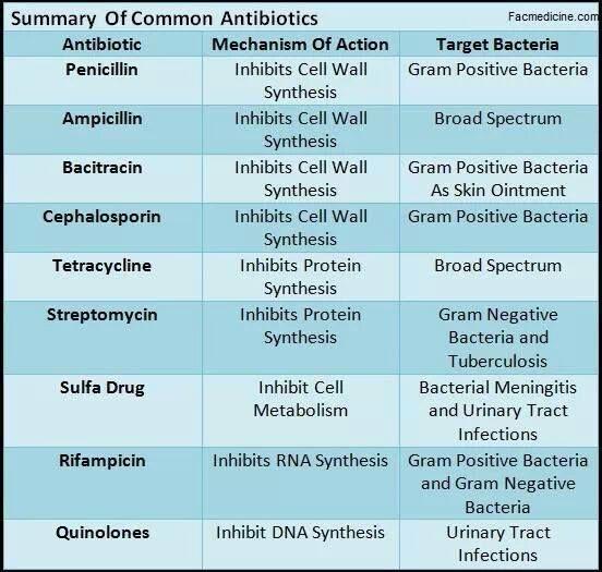 Antibiotics and What They Do