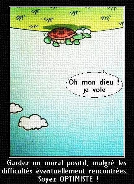 """Very cute - Always try to find the bright side.  Like this turtle - he's turned over and says, """"I'm flying!!"""""""