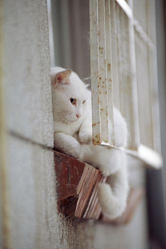 White Cat: