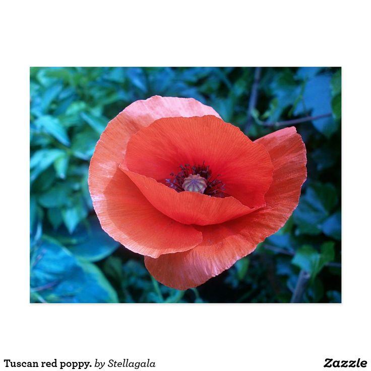#poppy #poppies #red Tuscan red poppy. postcard