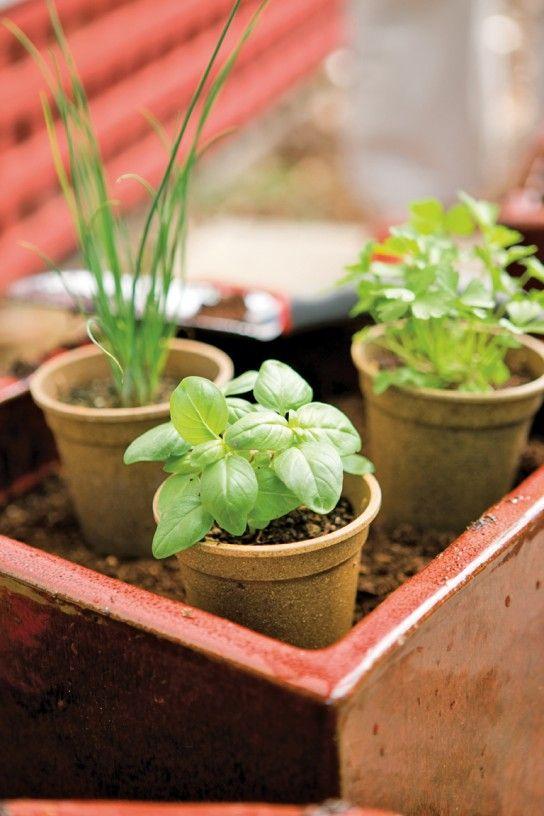Creating A Kitchen Herb Garden (The Blender   A Williams Sonoma Blog)