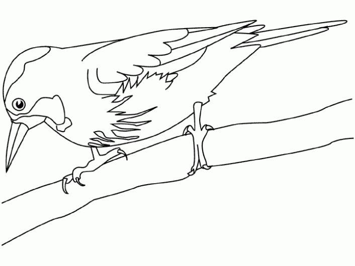 Dibujos de Pájaros para colorear. Imagenes de Pájaros.