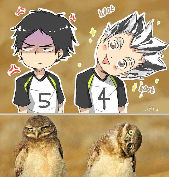 #bokuto #akashi #zoo_players #haikyuu