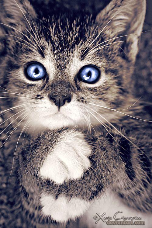 Love the blue eyes