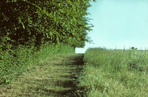 """Gilles CLEMENT, Paysagiste, Jardinier. """"Le Champ"""" à côté de la maison et du jardin de la Vallée dans la Creuse. Terrain d'expérience du jardin en mouvement."""