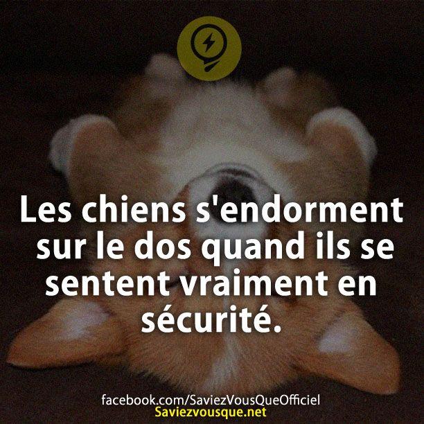 Les chiens s'endorment sur le dos quand ils se sentent vraiment en sécurité. | Saviez Vous Que?