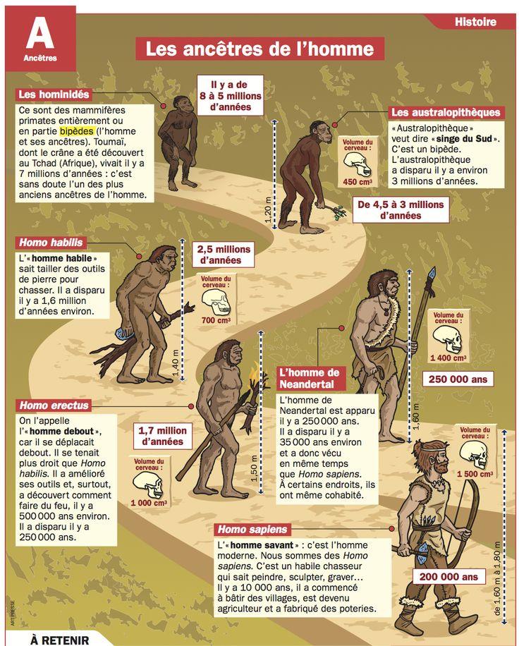 Fiche exposés : Les ancêtres de l'homme                                                                                                                                                                                 Plus