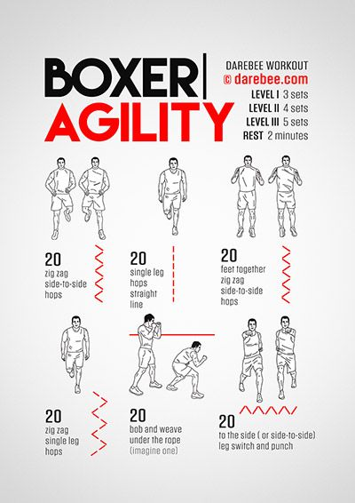Boxer Agility Workout
