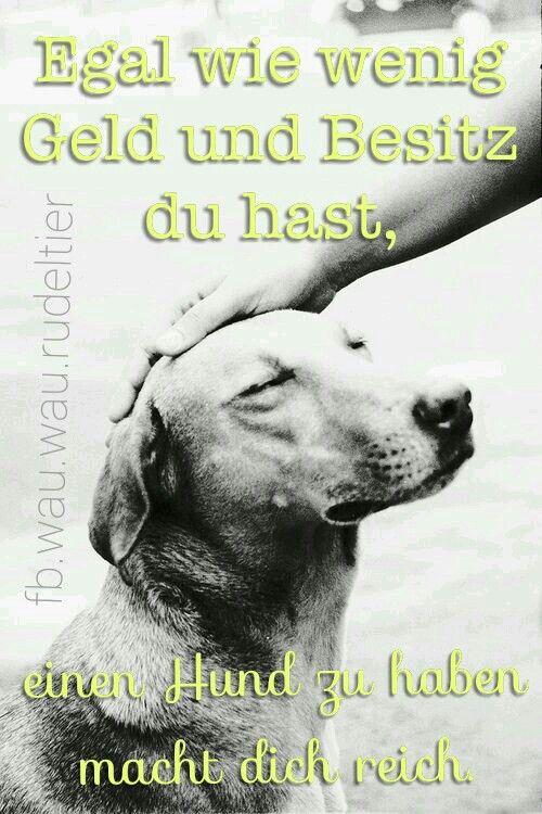 Egal wie wenig Geld und Besitz du hast, einen Hund zu haben macht dich reich. (Louis Sabin)  FB.wau.wau.rudeltier