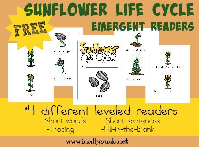 Kids will enjoy learning about the Life Cycle of a Sunflower with these fun and leveled readers!! {4 levels} :: www.blessedbeyondadoubt.com