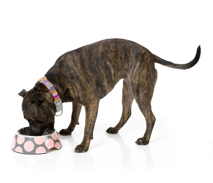 FuzzYard Bubbleicious Easy Feeder Pet Bowl - Pink