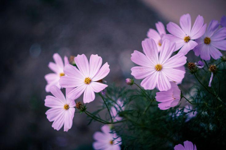 faire livrer des fleurs 66 #fleurs #bouquet