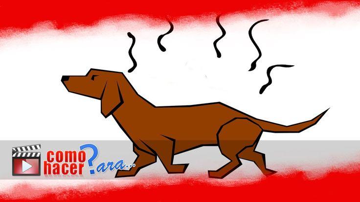 Cómo Quitar el Olor a Perro de los Ambientes