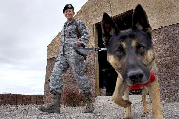 Dogs of War: 23 Facts You Never Knew About Military Working Dogs