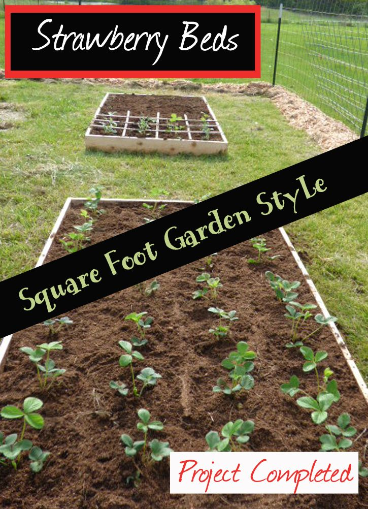 31 Best How Does Your Garden Grow Images On Pinterest Gardening Tips Vegetable Garden And