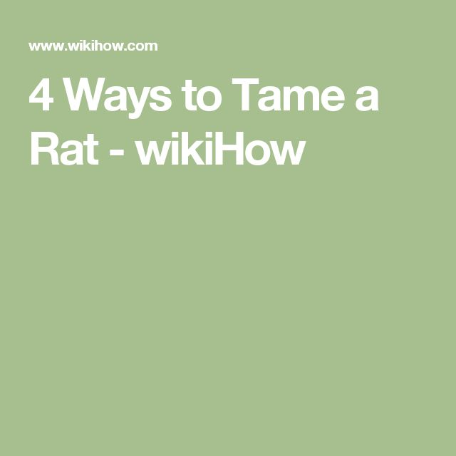 4 Ways to Tame a Rat - wikiHow