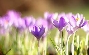 campo de flores imagenes - Google Search