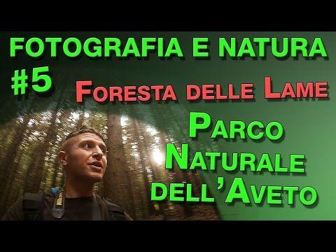 Fotografia e Natura #5: Foresta delle Lame - Parco Naturale dell'Aveto - YouTube