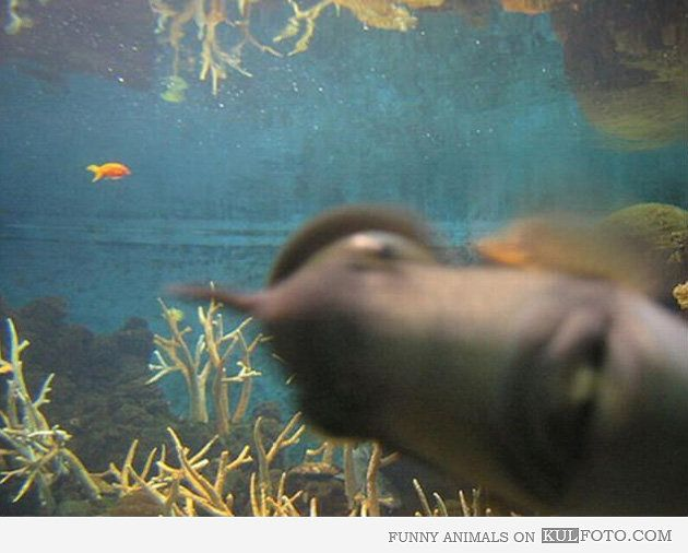 Best Photobombs Images On Pinterest And Still Animal - 35 hilarious animal photobombs ever