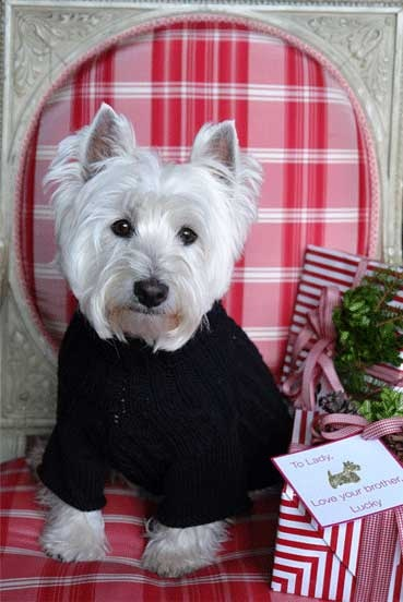 West Highland White Terrier - Home | Facebook