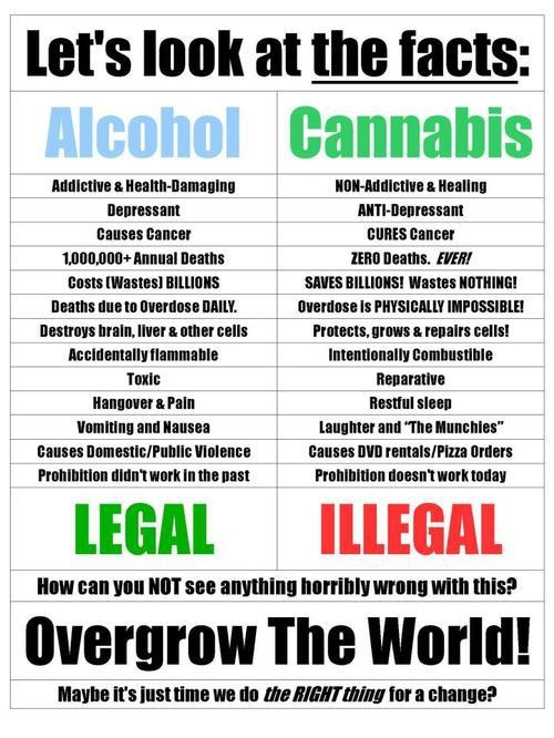 compare and contrast essay marijuana vs alcohol Compare and contrast with those who use equivalent amounts of alcohol or tobacco bottom line: if you use mj moderately, and are otherwise of at least average physical health, you ain't got anything to worry about as far as physical problems go.