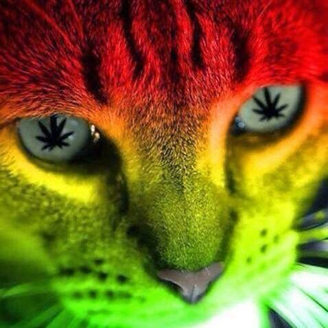 Weed Quotes Wallpaper Cat Weed Leaf Eyes Marijuana Art Quotes Etcetera Pinterest