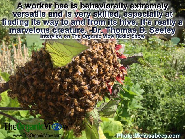 https://i.pinimg.com/736x/fc/7e/71/fc7e71a2aaf74a18c90114176bf07205--worker-bee-the-hives.jpg