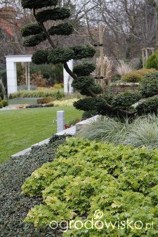 Zimozielony ogród przy białym domu - strona 239 - Forum ogrodnicze - Ogrodowisko