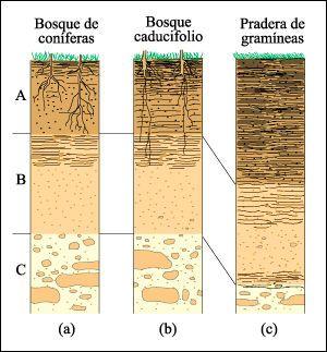Edafolog a horizontes caracter sticos de los bosques for Perfil del suelo wikipedia