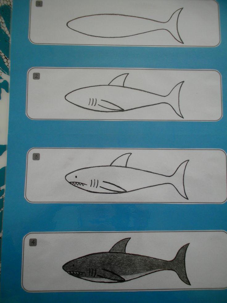 Haai tekenen met stappenplan (A3) *liestr*