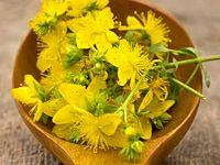 Rady čtenářky: léčivé rostliny na bolesti, otoky, k dezinfekci...
