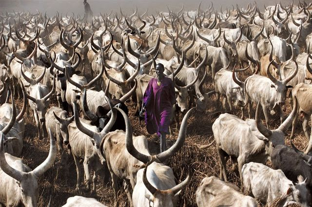 The Dinka are a group of several closely related peoples living in southern Sudan along both sides of the White Nile.