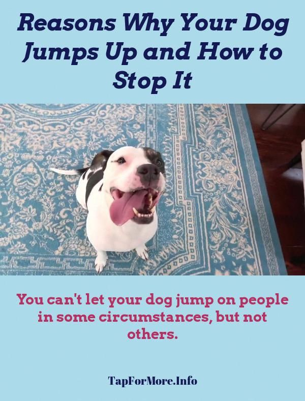 Stop Dog Jumping And Agility Training For Dogs Check The Image