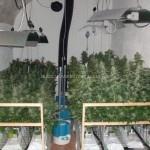 El cultivo en Lana de Roca o Inerte