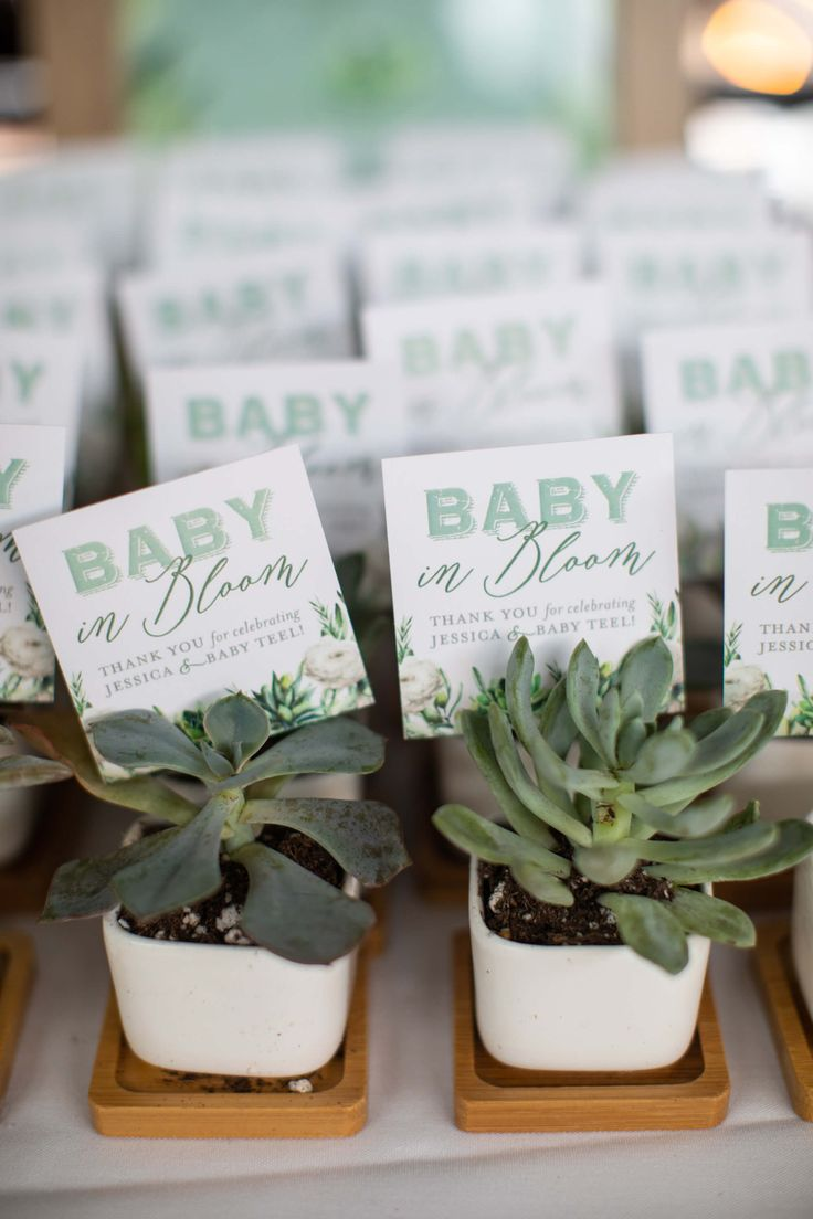 Succulent Themed Baby Shower