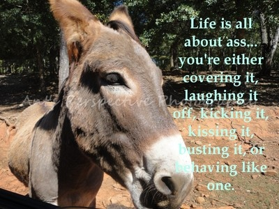 INSPIRATIONAL SAYINGS QUOTES DONKEY MULE JACKASS LIFE ...