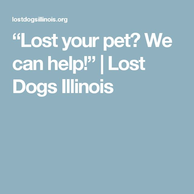 Lost Your Pet We Can Help Lost Dogs Illinois Losing A Dog Your Pet Losing You