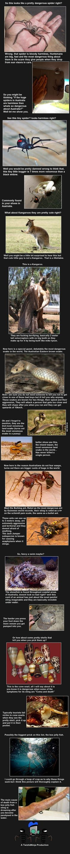 Most dangerous animals in Australia (pt. 1)
